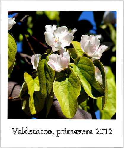 Primavera 2012. Valdemoro