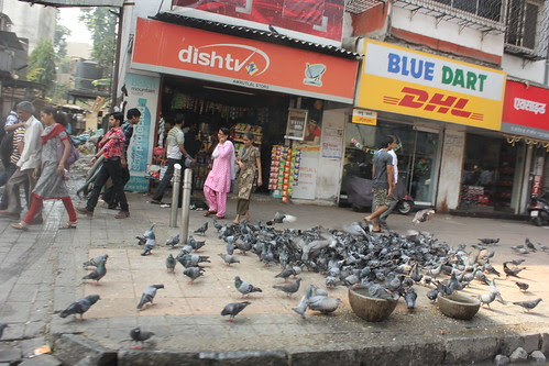 Mahim..Pigeons Of Peace by firoze shakir photographerno1