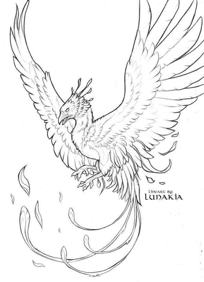 Malvorlage Feuervogel Phinx