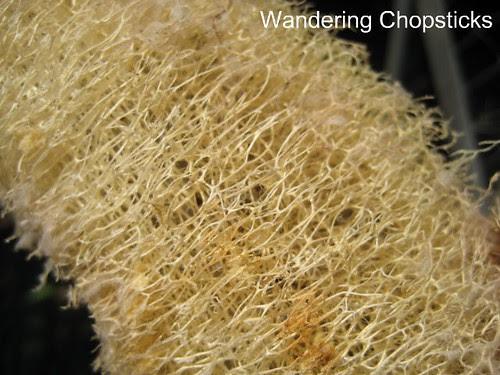 How to Make a Loofah Sponge 7
