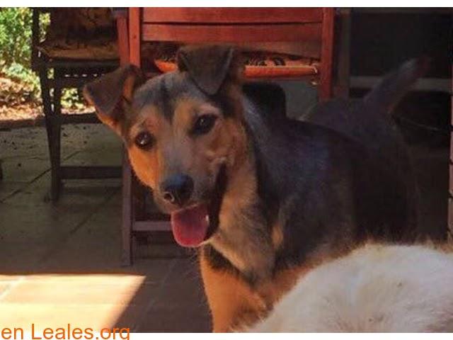 Perros perdidos » Tarragona » Binta se escapó asustada » @AidaLlopHola! Nos podríais ayudar a difundir, por favor?Ayer por la tarde perdimos a nuestra perrita en Altafulla...