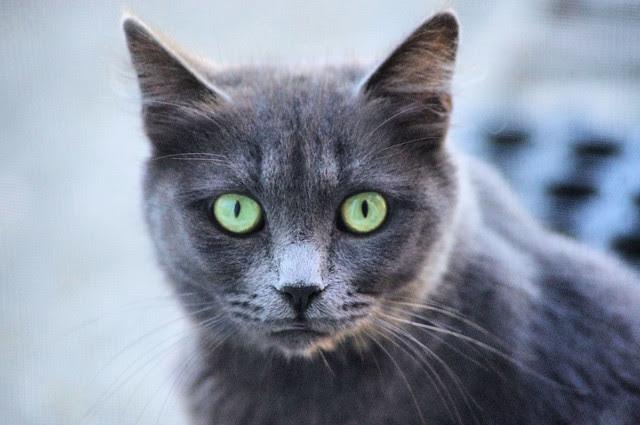2012_09_30_2012 cats 004