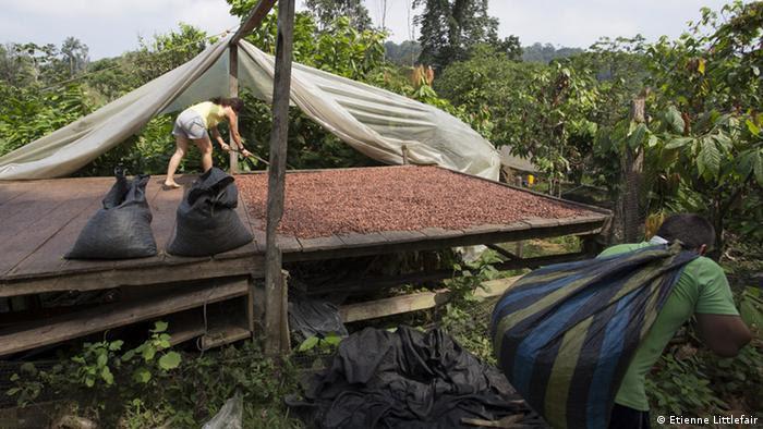 Granos de cacao secándose al sol.