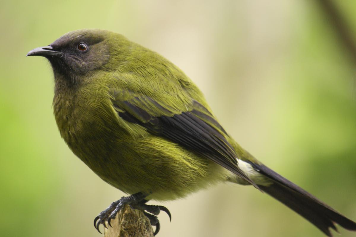 bird guide online