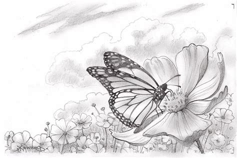 butterfly drawings life  art
