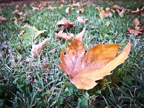 292/365 Parece que va siendo otoño... por Juan R. Velasco