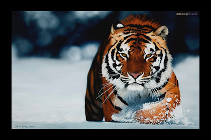 Wallpaper Of Tiger