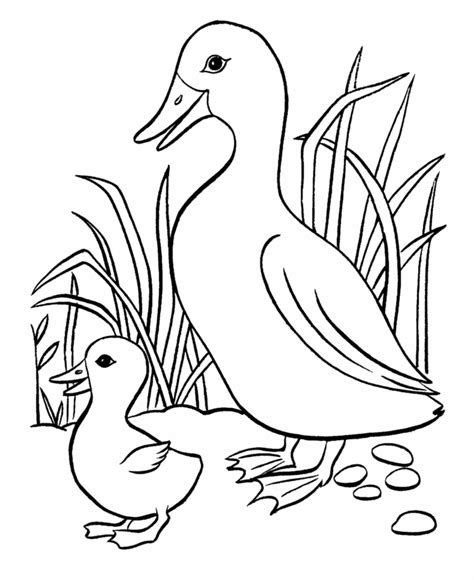 ducks coloring pages   print