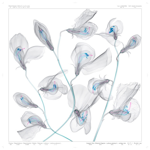 Inorganic Flora, A Collection of Detailed Botanical Blueprints