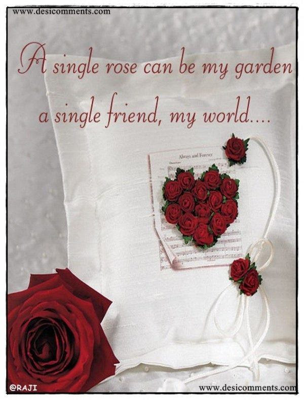 A Single Rose Can Be My Gardena Single Friend My World