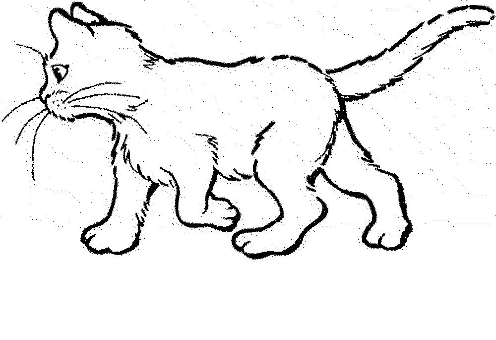 Realistic Cat Drawing at GetDrawings | Free download