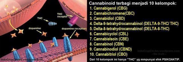 cannabis cannabinoid