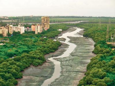 mumbai-mangroves
