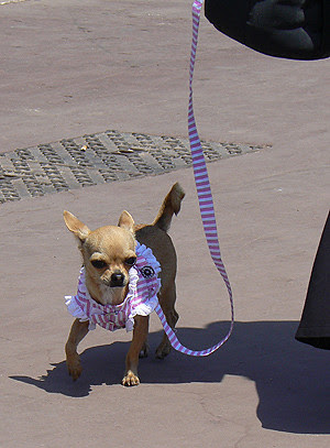 petit chien marin.jpg