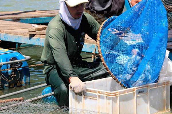 Resultado de imagem para Codevasf capacita piscicultores e pescadores artesanais no semiárido baiano imagens
