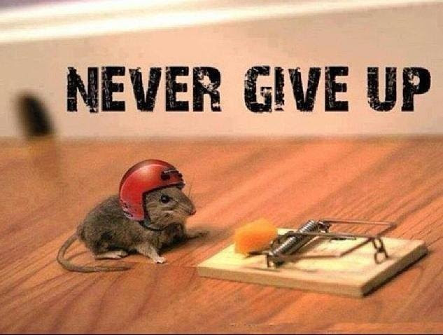 Never Dont Give Up Saw This On A Fail Tattoo Once Meme By