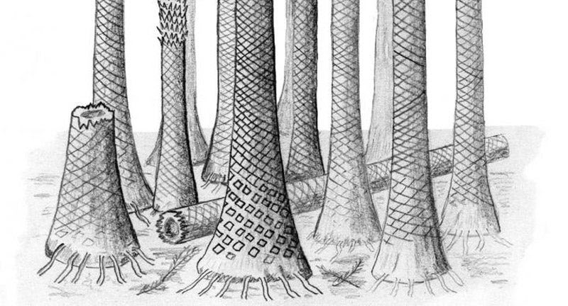 A Fossil Tropical Forest Is Helping Solve an Ancient Climate Mystery