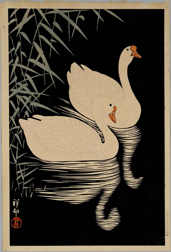 Swans (date unknown)