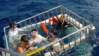 Znalezione obrazy dla zapytania elizabeth taylor and sharks