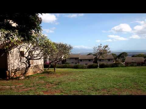 Citrus Park Elementary students beautify campus - Worldnews.