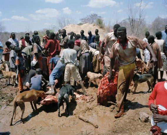 http://images.corriereobjects.it/gallery/Cronache/2010/03_Marzo/elefante/1/img_1/08_Elephant_Story-Copyright_David_Chancellor_672-458_resize.jpg