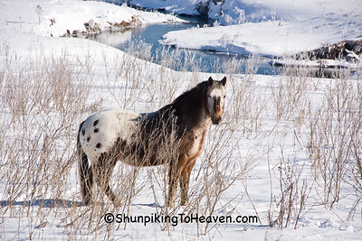 Winter Horse, Iowa County, Wisconsin