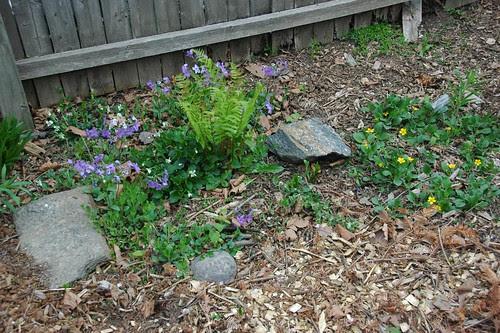 Wildflowers near the Gardener's Nook