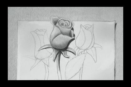 Dibujo Rosa