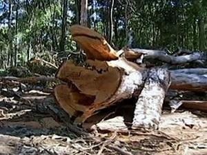 Desmatamento norte de MT (Foto: Reprodução /TVCA)