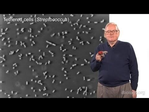 Se acaba de descubrir un tercer motor giratorio en bacterias