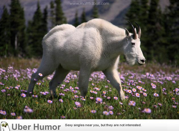 Buff As Fuck Mountain Goat Funny Pictures Quotes Pics Photos