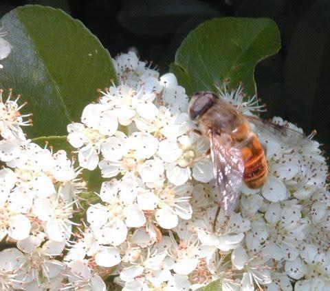 summerflowersbee