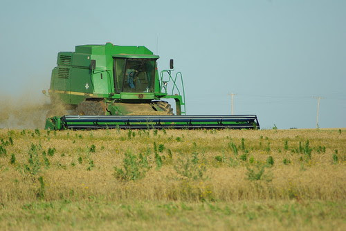 Harvest 014
