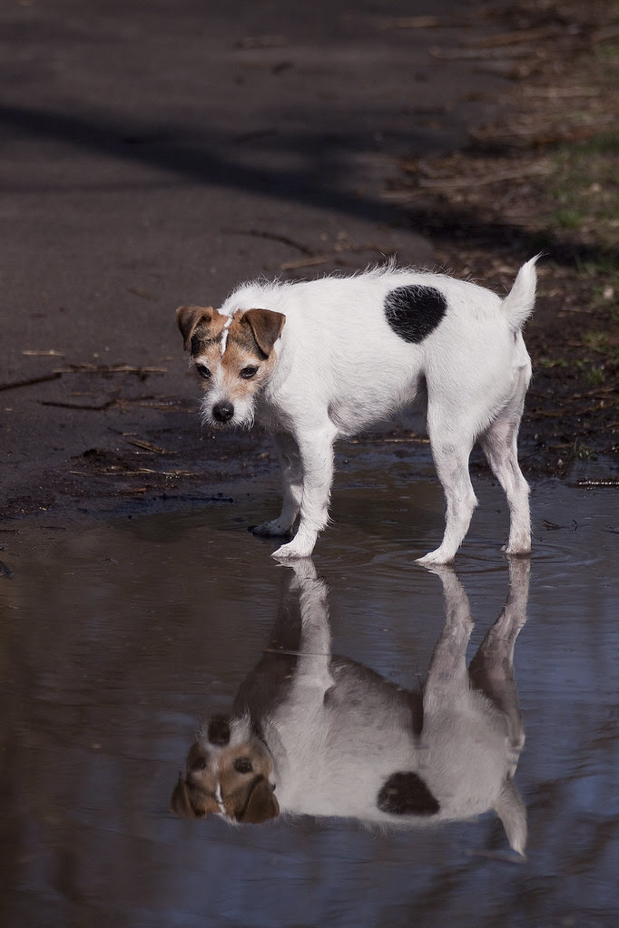 water pal Benny