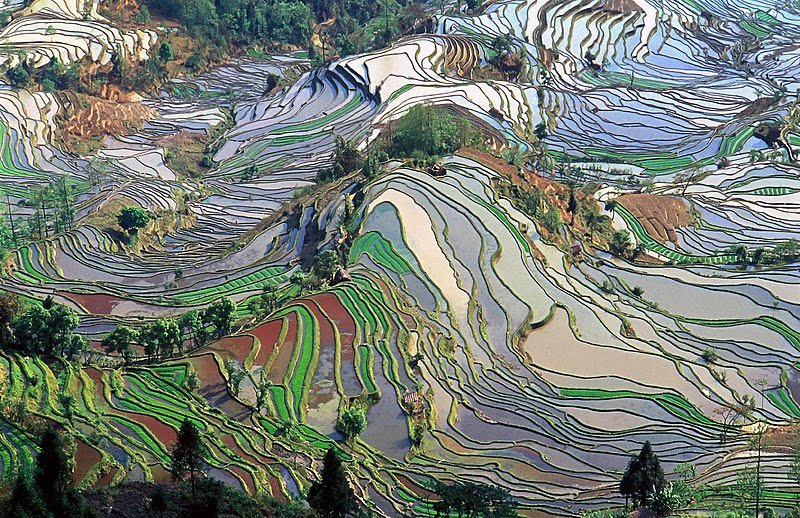 File:Terrace field yunnan china denoised.jpg