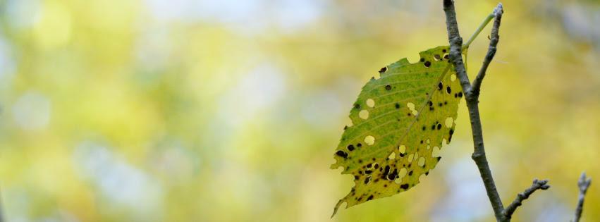 but bitten leaf