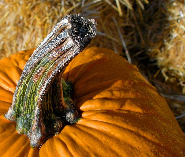Pumpking stem
