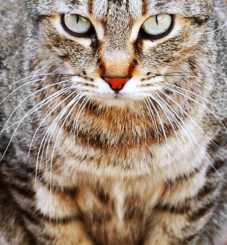 Cat 01-04-2013