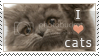 photo Stamp__I_love_cats_by_jelloween_zps0gwx9soo.png