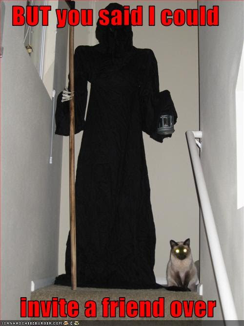 photo of a Siamese with the grim reaper