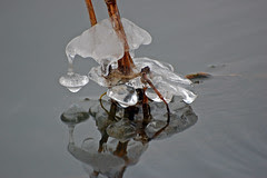 clinging ice