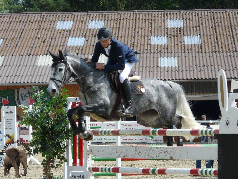 Springreiten 03, Pferde, Pferd, Horse, Turnier