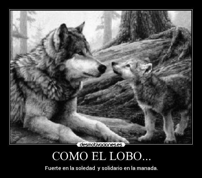 Como El Lobo Desmotivaciones