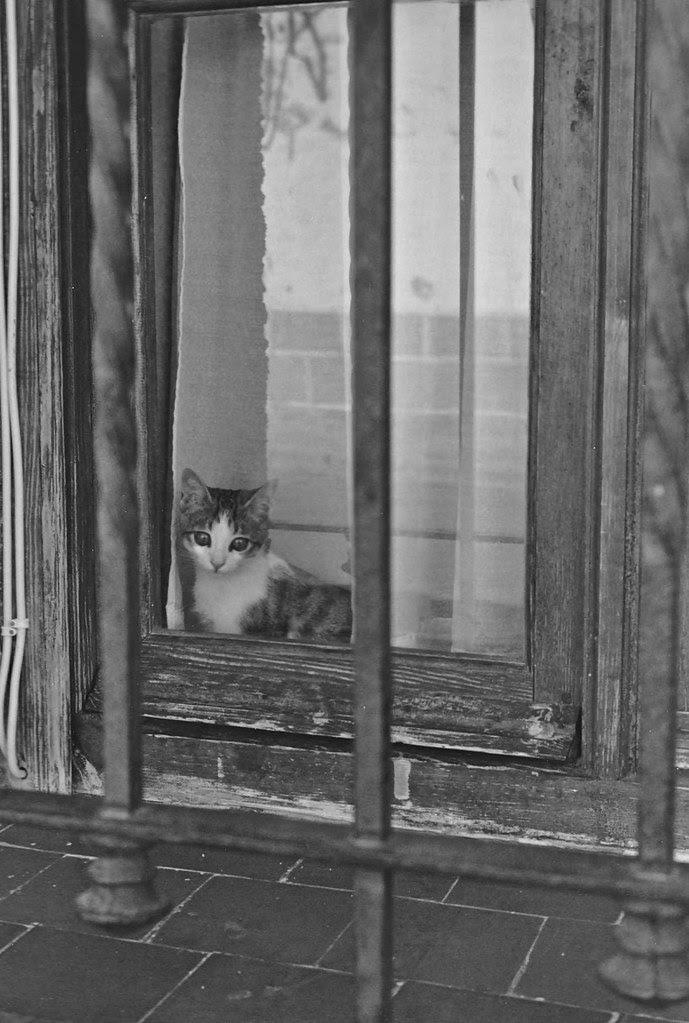 Gato tras una ventana en Toledo en 1967. Fotografía de John Fyfe