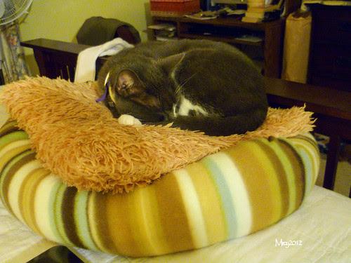 sleeping arrangement by M'roy