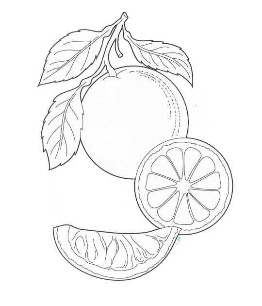 Dibujos Para Colorear Naranja Naranja Dibujo Para Colorear Trabajo