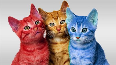 learn colors cute kitten cat colorful learning color video