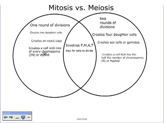 Venn Diagram Mitosis And Meiosis - Wiring Site Resource