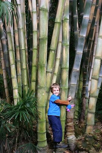 huntington more bamboo love