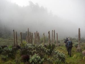 Mountain climbers visit the Rwenzori mountain range…